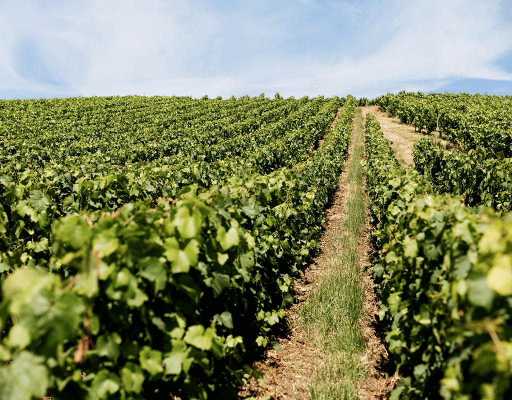Champagne Oudiette x Filles   Parcelles de vignes