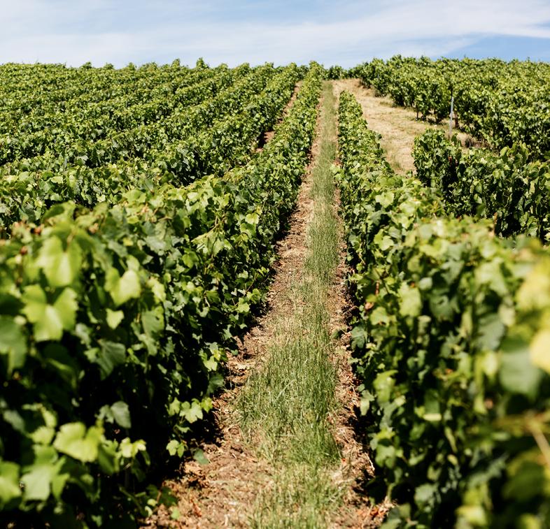 Champagne Oudiette x Filles | Parcelle de vigne